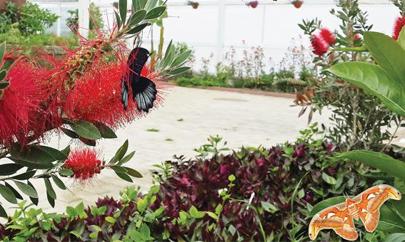 Antalya Kelebek Park