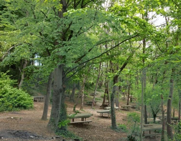 Beykoz Kaymakdonduran Piknik Alanı