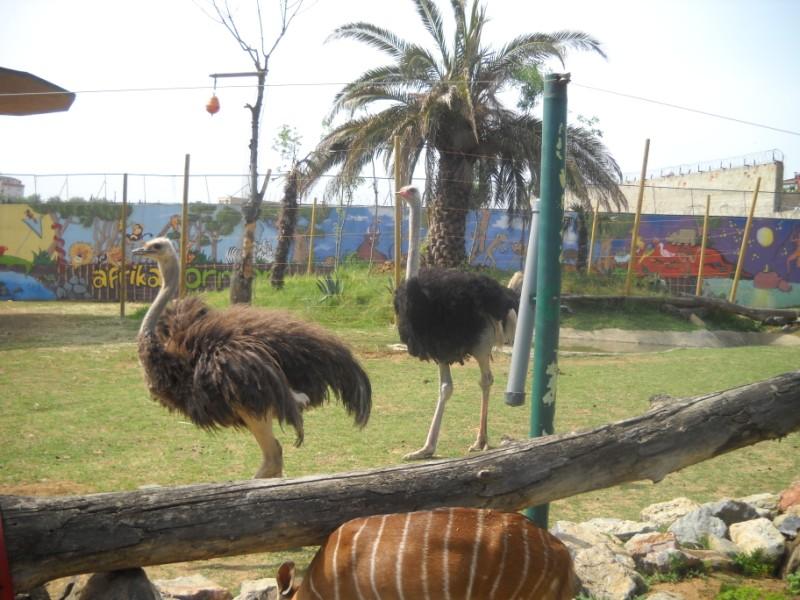 Darıca Farul Yalçın Hayvanat Bahçesi