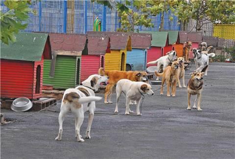 Kadıköy Belediyesi Hayvan Barınağı